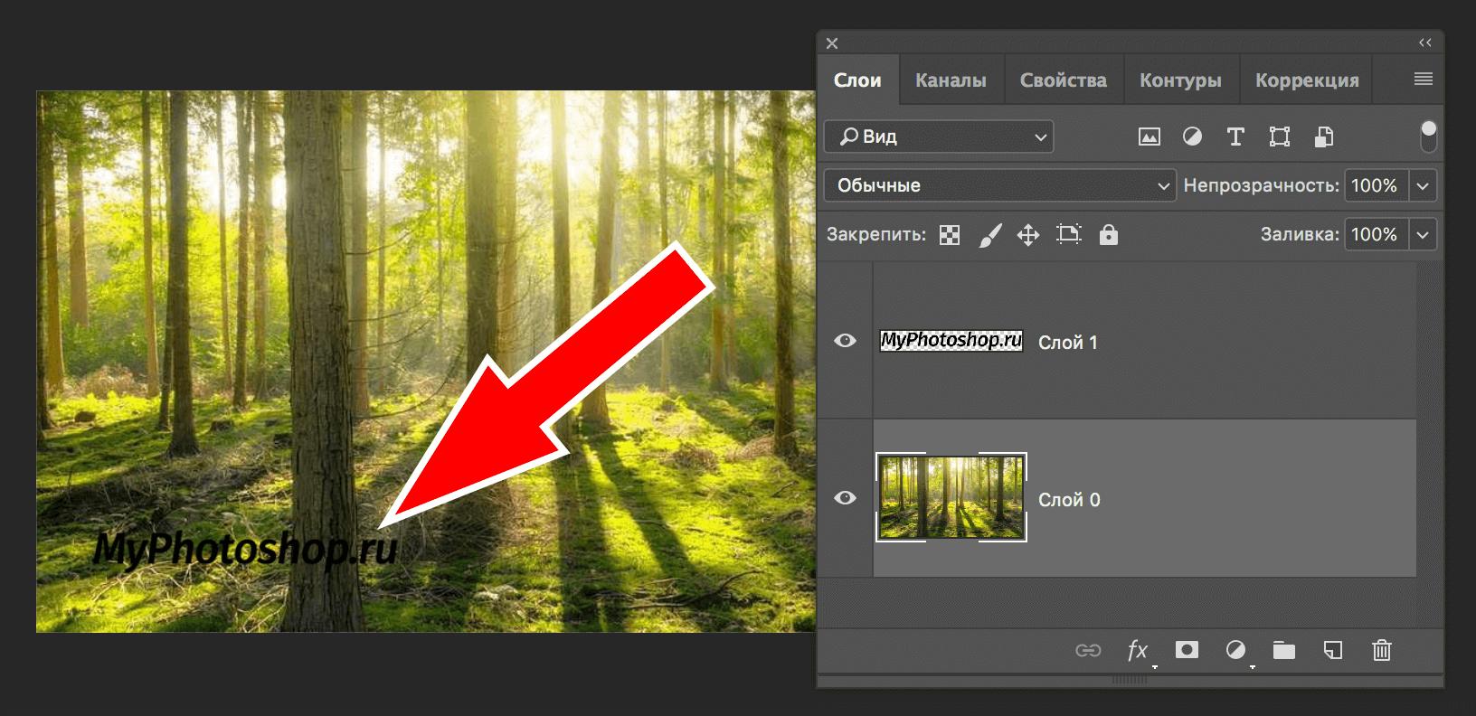 логотип и фото леса