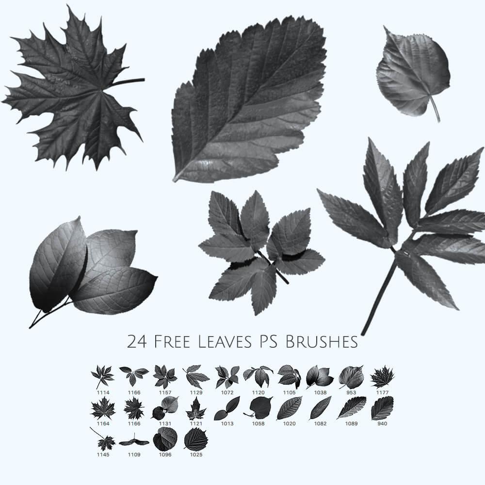 Кисти с листьями различных деревьев для Фотошопа