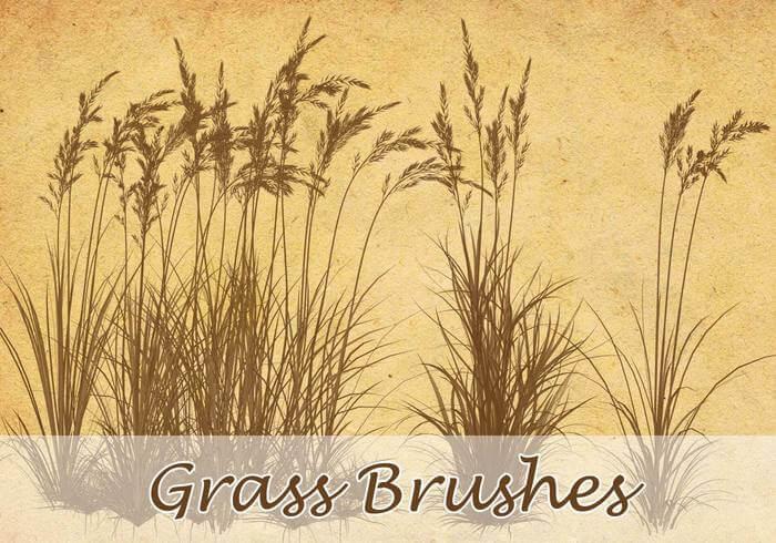 Кисти с полевыми травами для Фотошопа