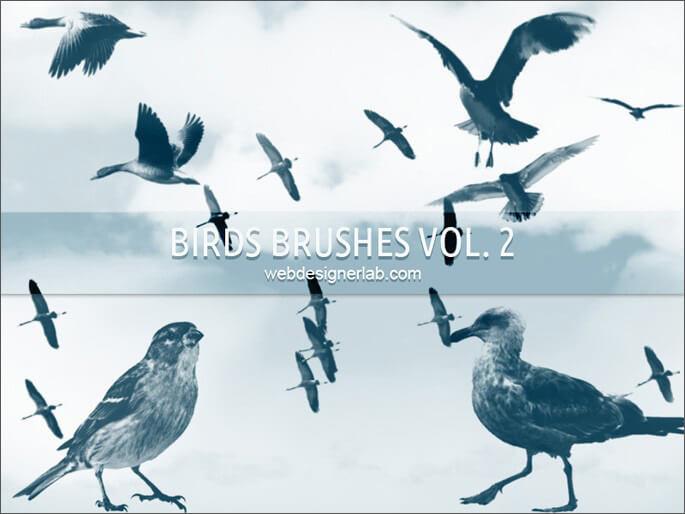 Кисти с различными птицами для Фотошопа