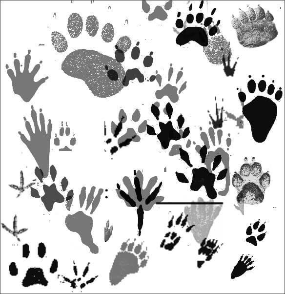 Кисти для рисования следов животных в Фотошопе